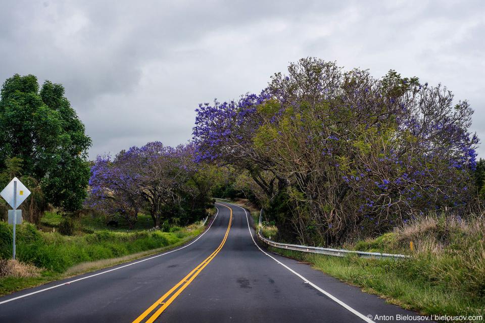 Haleakala highway (Maui, HI)