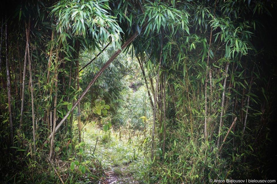 Upper Na'ili'ili-Haele Falls trail (Maui, HI)