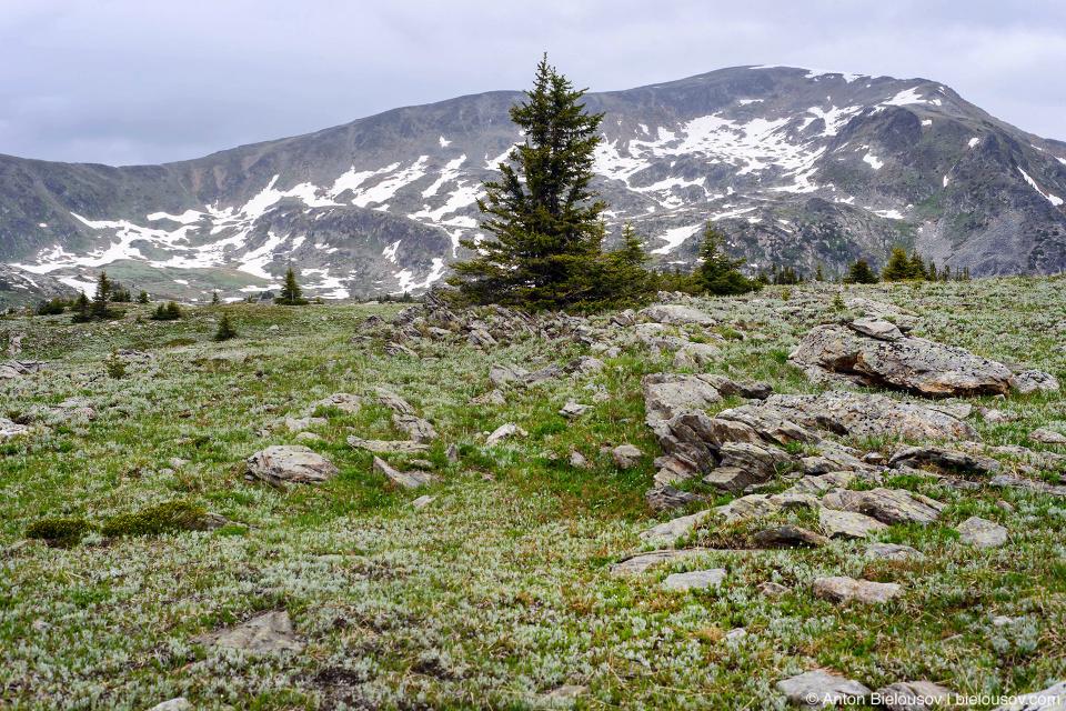 Плато на одной из вершин Trophy Mountain