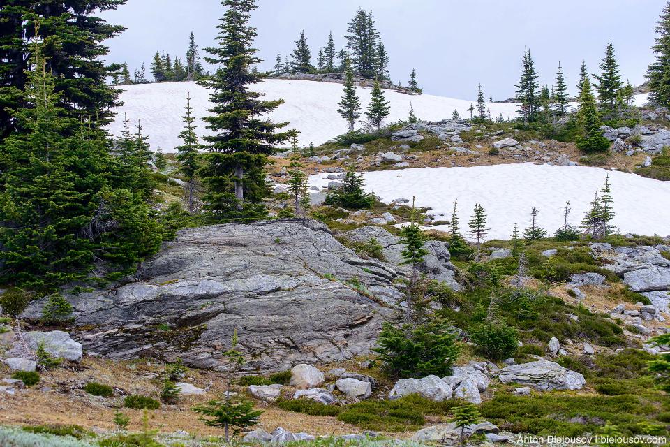 Альпийская тундра, Trophy Mountain (Wells Gray Provincial Park, BC)