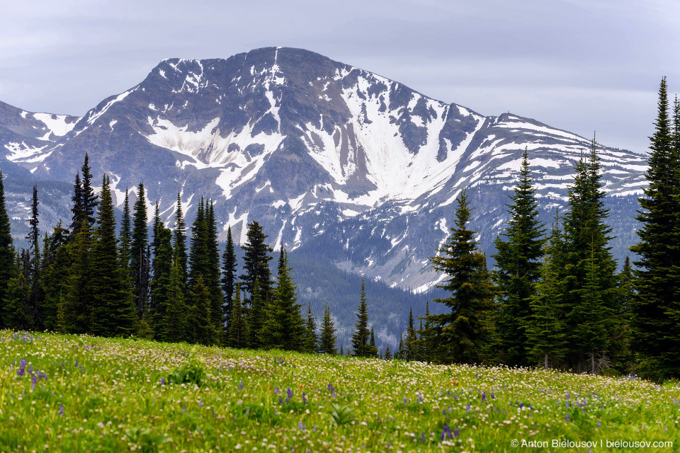 Flower Meadows, Trophy Mountain (Wells Gray Provincial Park, BC)