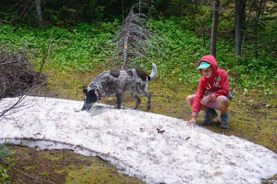 Снег в субальпийской зоне Trophy Mountain