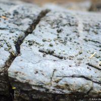 В любом случае, исследуя парк, обратите внимание на такие вот «засохшие какашки» на камнях. На самом деле — это окаменевшие черви, вернее сами черви давно разложились, а вот содержание их желудка окаменело. В общем, это и есть засохшие 💩 только возрастом ~200 млн. лет.