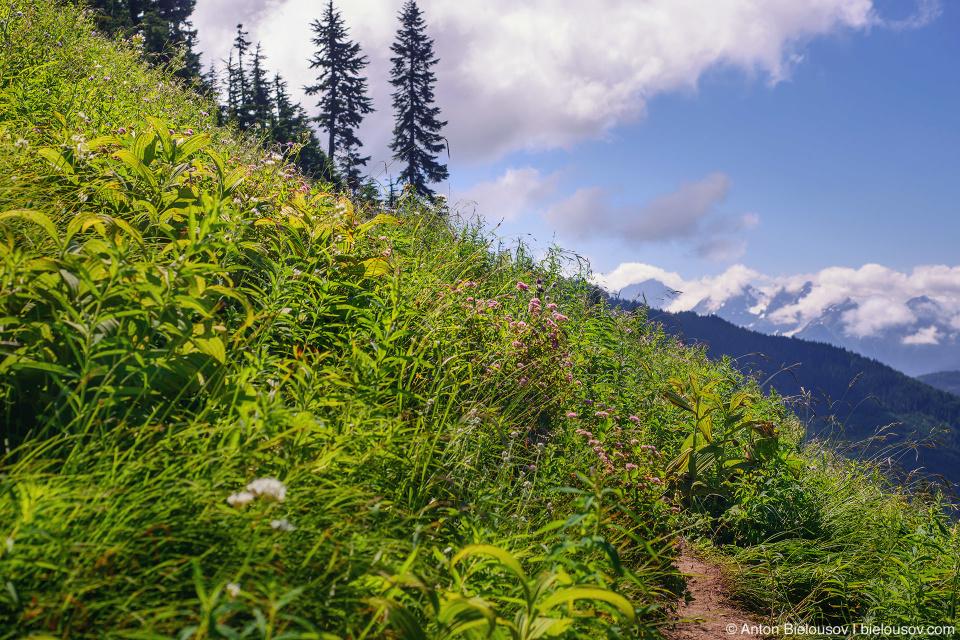 Тропа через альпийские луга на Cheam Peak