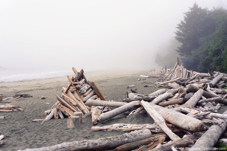 Pacific Rim Beach Morning