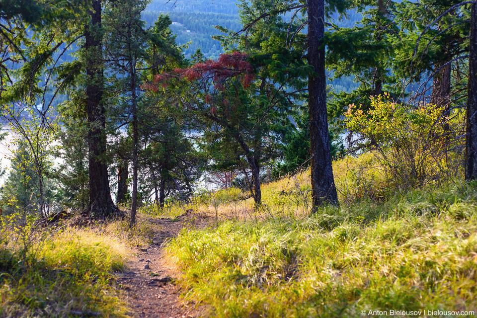 Copper Island loop trail (Shuswap Lake Provincial Park, BC)