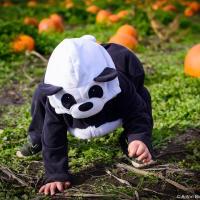 Небольшой пост для семейного альбома — первый День всех святых для маленькой панды.