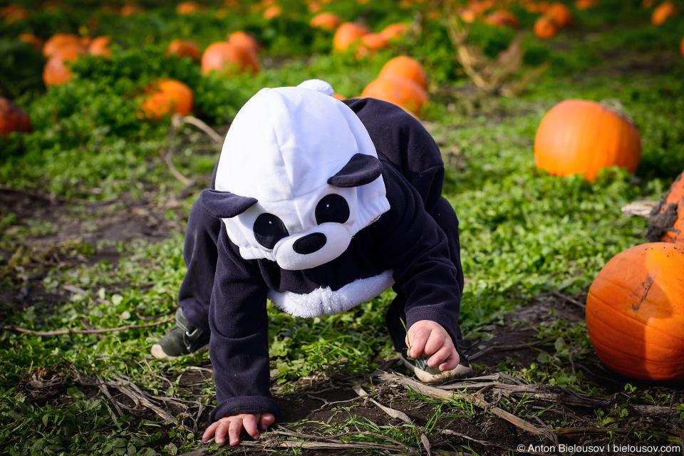 Halloween Panda Costume
