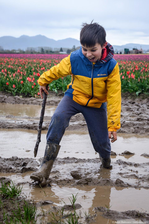 Грязь на тюльпановых полях (США)