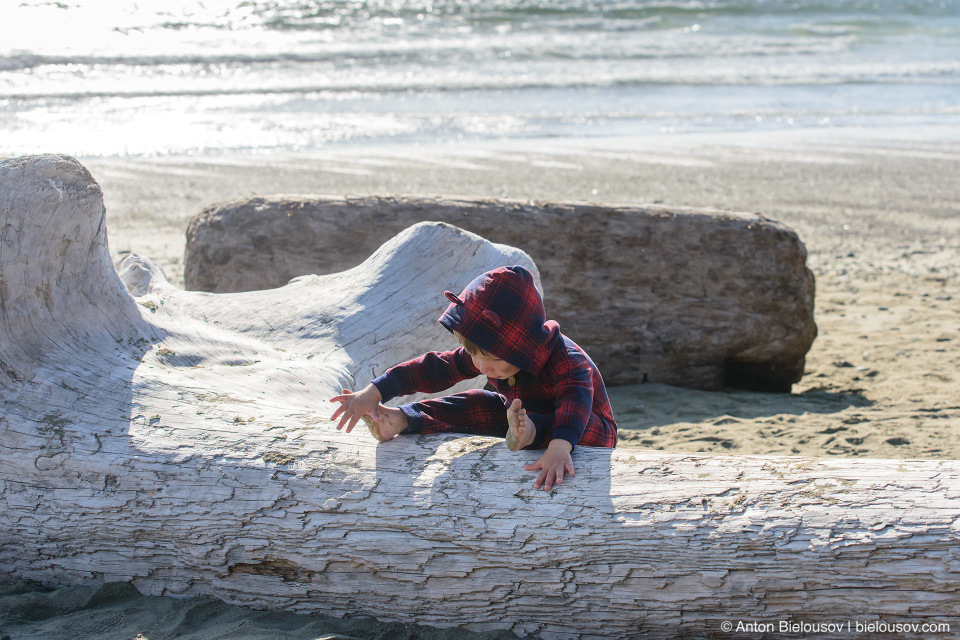 Driftwood logs on Long Beach (Pacific Rim National Park, BC)