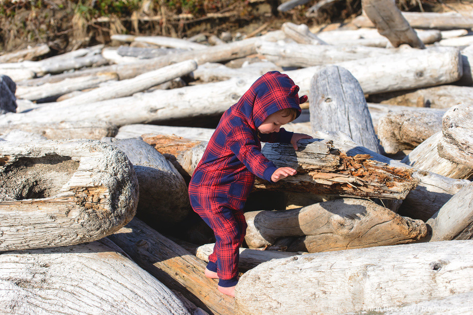 Driftwood logs on Long Beach (Pacific Rim National Park, BC)