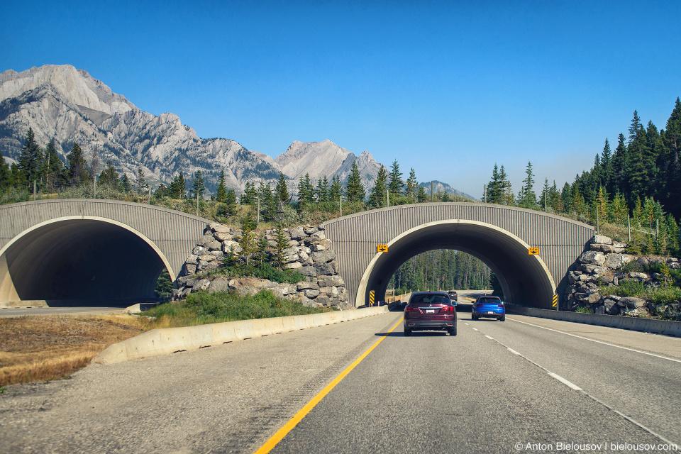 Animal migration passage over the highway (Banff National Park)