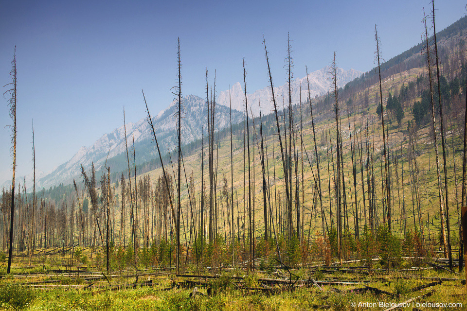 Bow Valley Parkway prescribed burn place (Banff National Park)