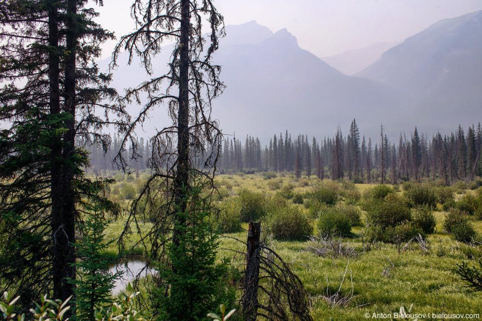 Moose Meadows (Banff, BC)