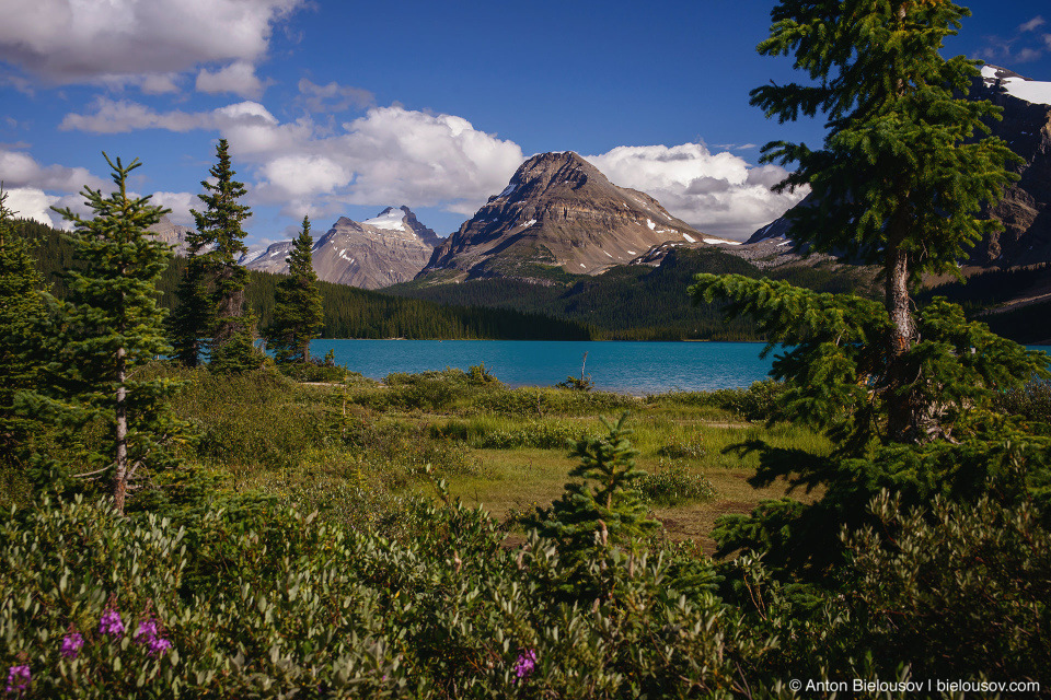 Bow Lake (Banff National Park)