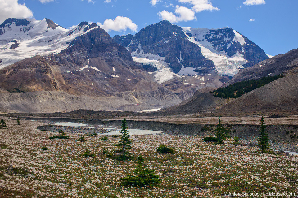 Athabasca Mountain, Columbia Icefield, Jasper National Park