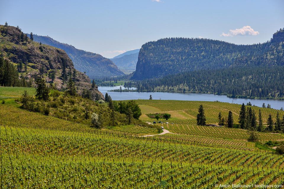 Blue Mountain Vineyard and Cellars view