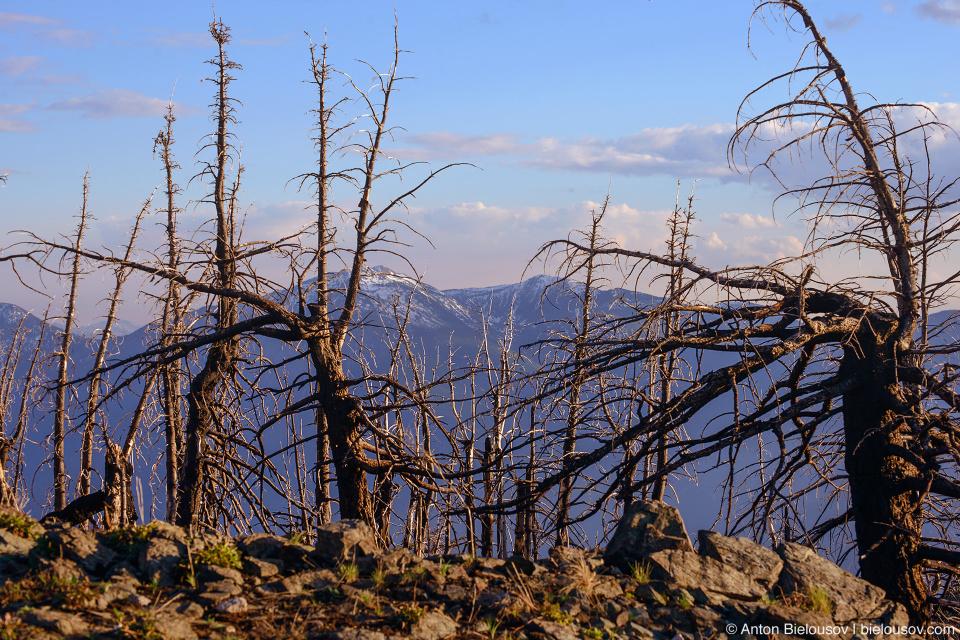 Mount Kobau (Osoyoos, BC)