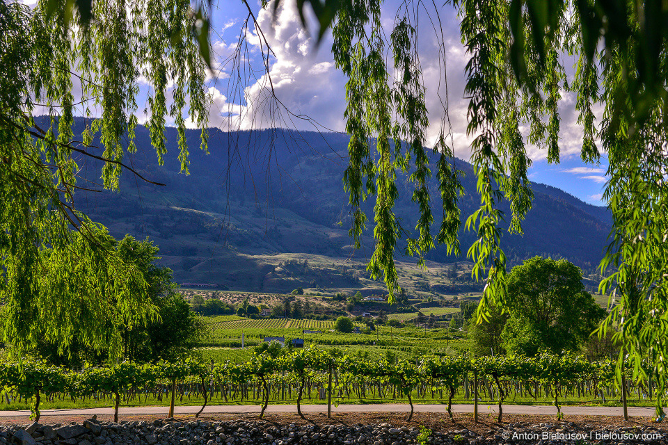 Osoyoos wineyards