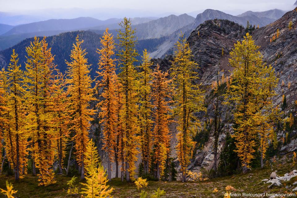 Желтые лиственницы на тропе на пик Frosty Mountain, Manning Provincial Park, BC