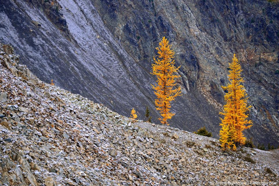 Желтые лиственницы на тропе на пик Mount Frosty, Manning Provincial Park, BC