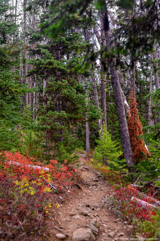 Тропа на пик Frosty Mountain в конце сентября