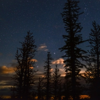 Ночное небо в лиственницах