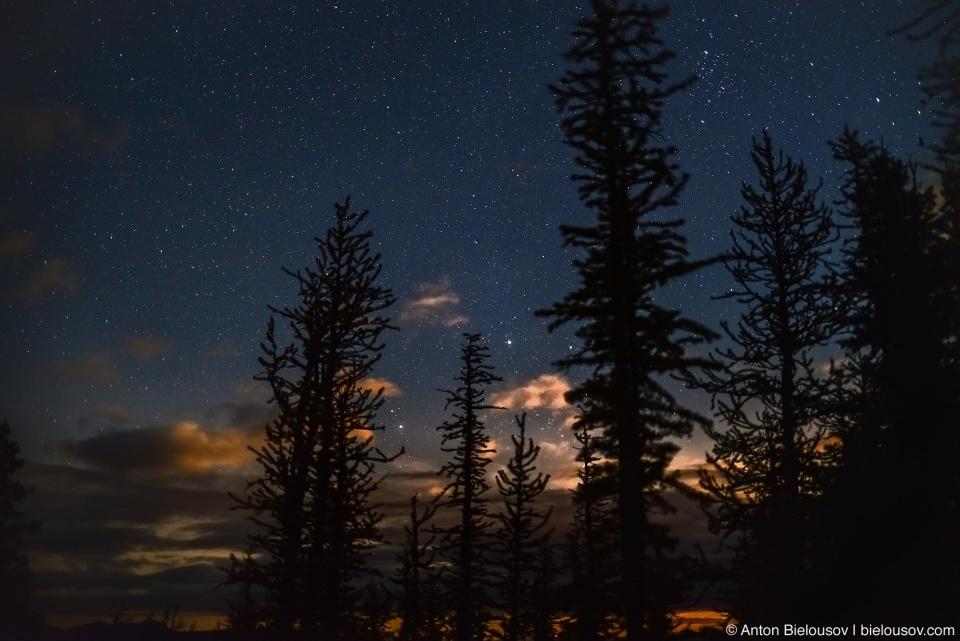 Ночное небо в лиственницах, Manning Provincial Park, BC