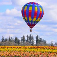 На фестиваль тюльпанов в Вудберне съезжаются энтузиасты воздушных шаров со всей округи.