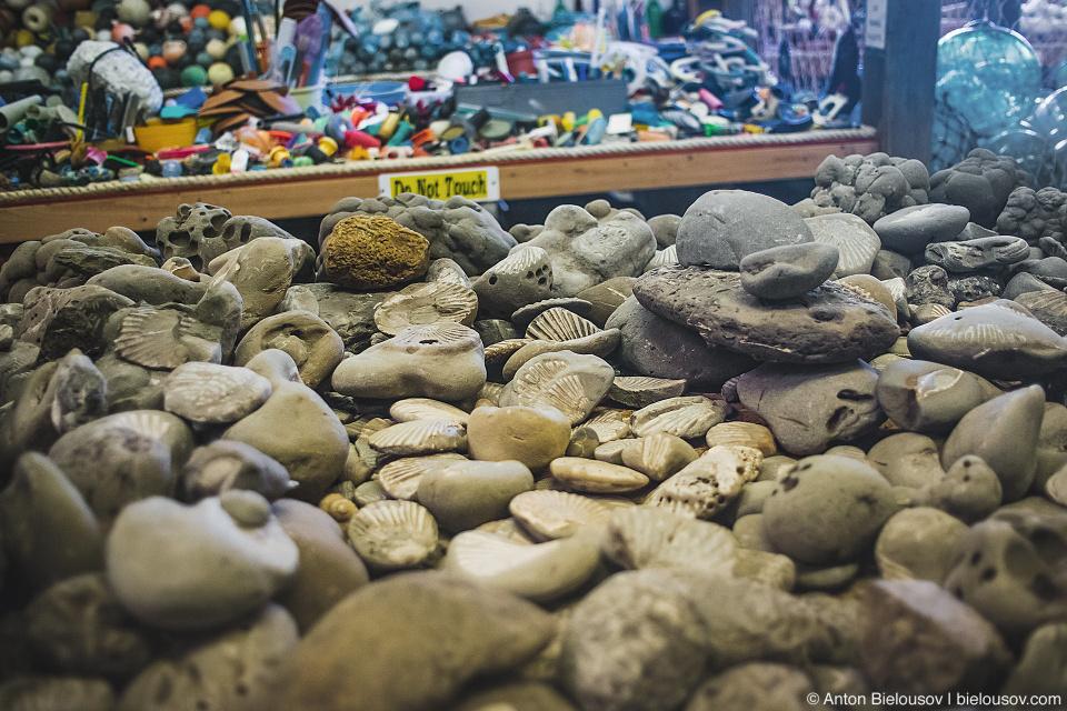 Fossils in John's Beachcombing Museum, Forks, WA
