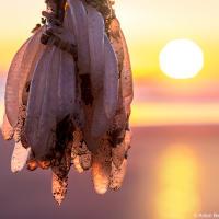 Или яйца кальмара в лучах заходящего солнца.