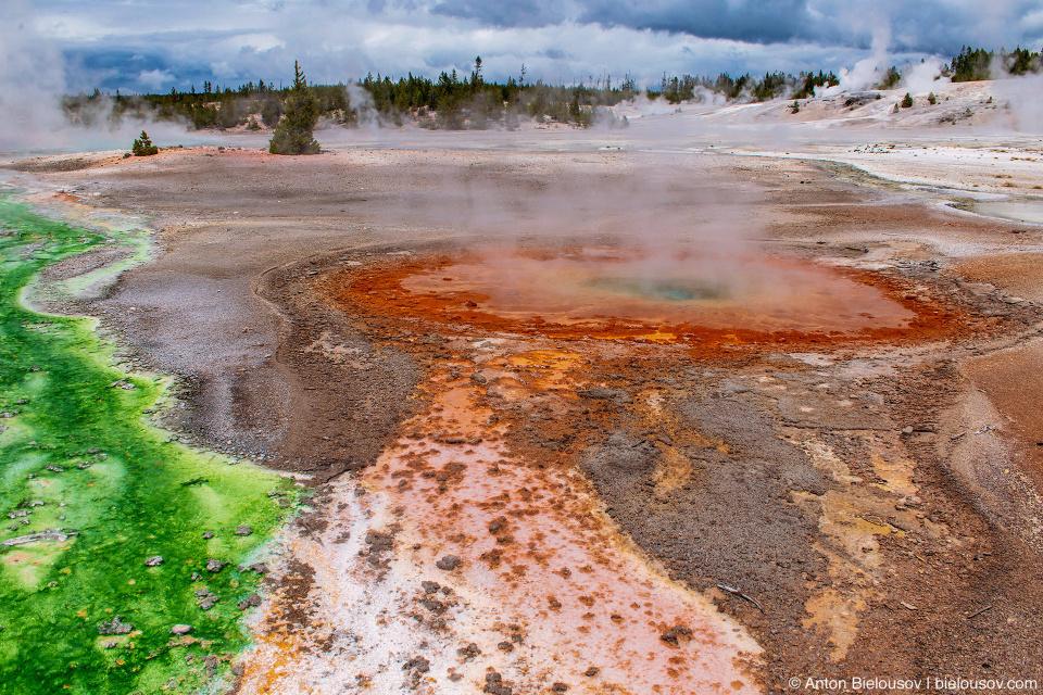 Whirligig Geyser — Norris Geyser Basin, Yellowstone NP