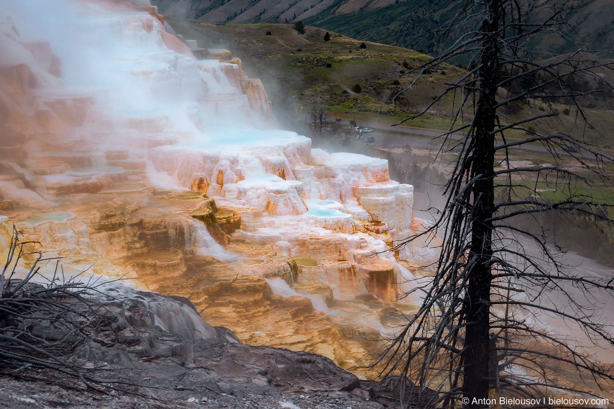 Canary Spring — Yellowstone NP