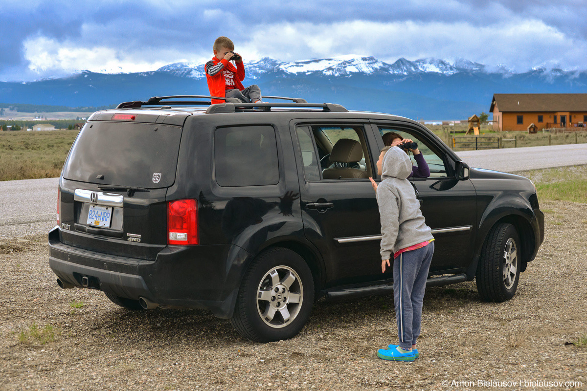 Honda Pilot bison watching — Yellowstone