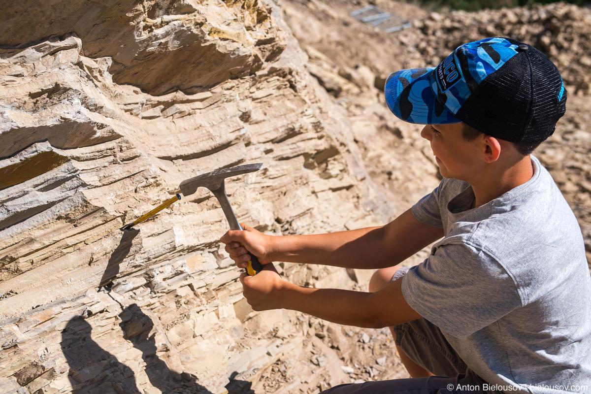 Stonerose fossils site — Yellowstone NP